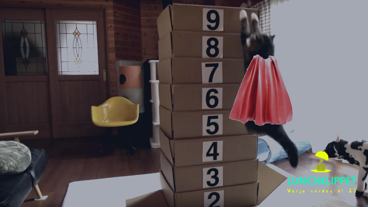 Superkatten testar höjdhopp!
